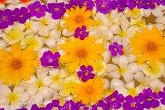 Ayurveda Blütenbad in der Ayurveda Shunyata Villa ~ Sri Lanka