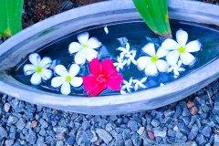 Liebevolle Blumendeko in der Ayurveda Shunyata Villa ~ Sri Lanka