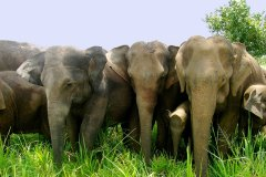Elefanten in Sri Lanka bei Ihrem Ayurveda Urlaub erleben
