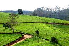 Sri Lankas grüne Natur und weite Plantagen