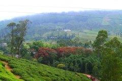 Die wundervolle Natur von Sri Lanka